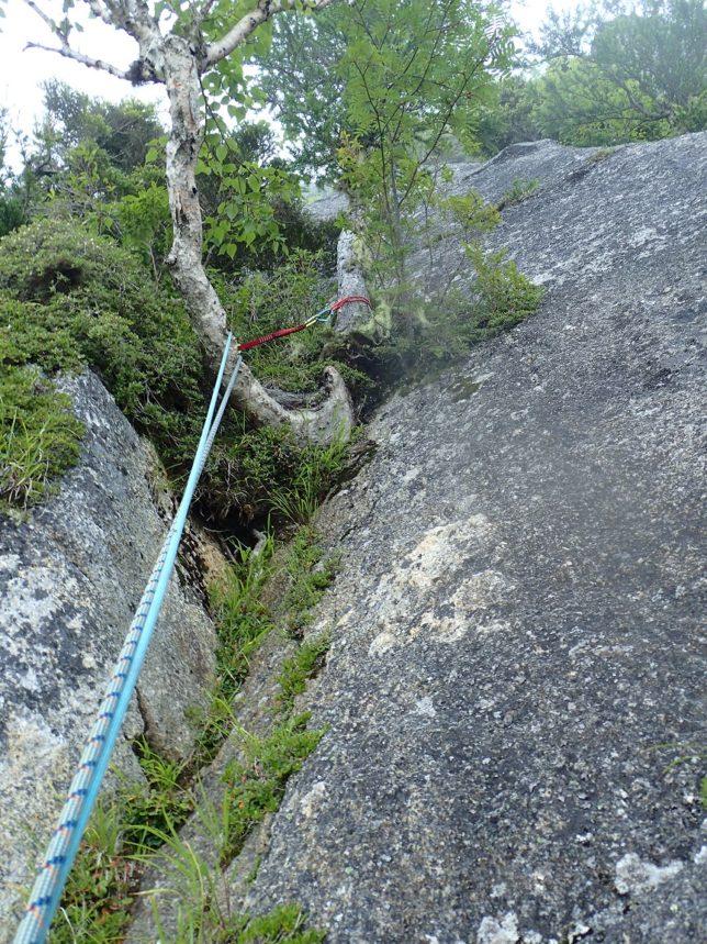 9p目の木登り